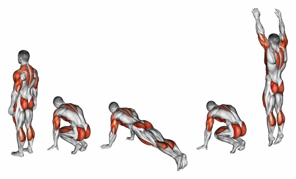 Burpee form. Target muscles are marked in red.